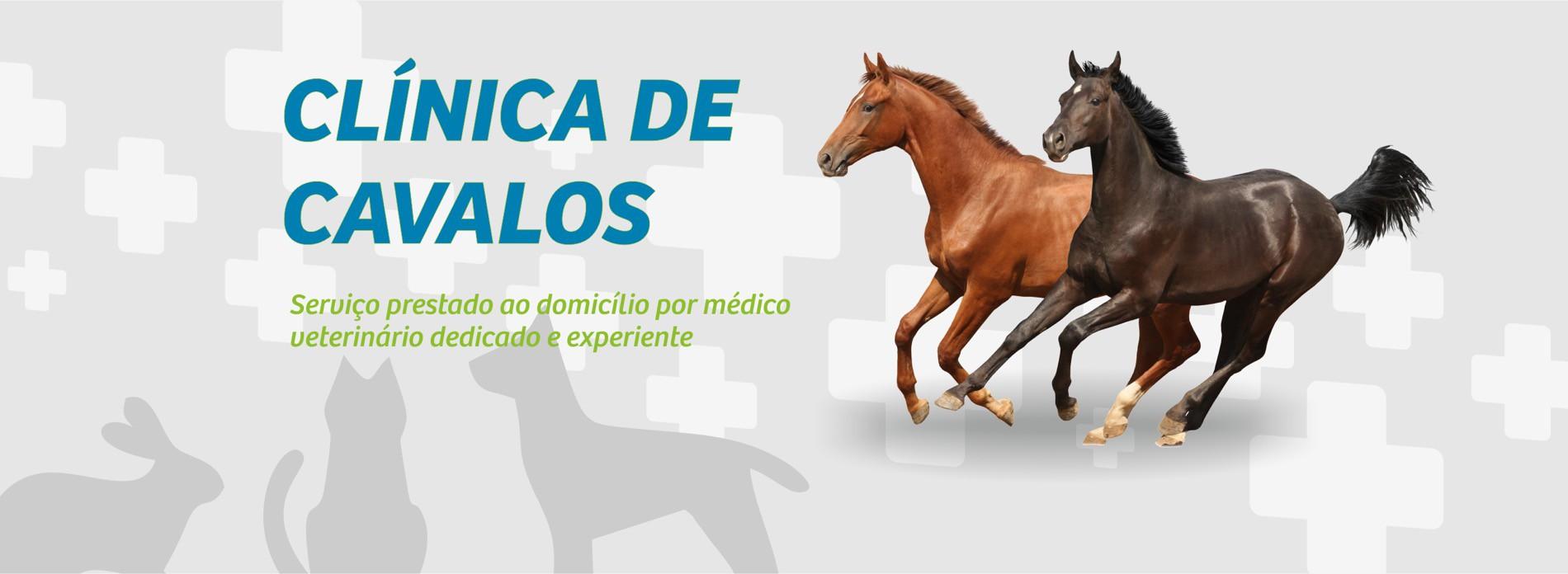 Clínica de Cavalos Mais Vida